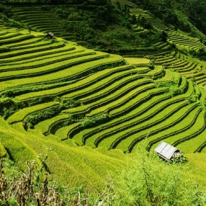 vietnam-rice-terraces